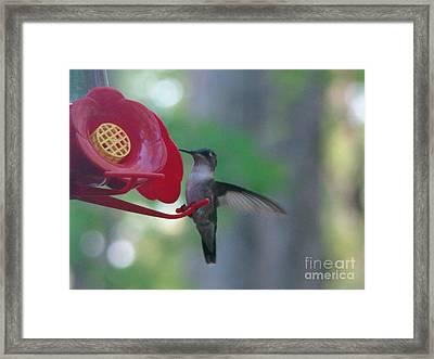 Hummingbird  Framed Print by Rand Herron