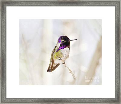 Hummingbird Framed Print by Rebecca Margraf