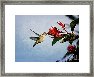 Hummingbird Red Flowers Framed Print