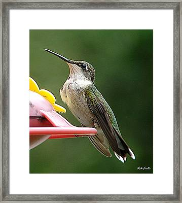 Framed Print featuring the photograph Hummingbird by Rick Friedle