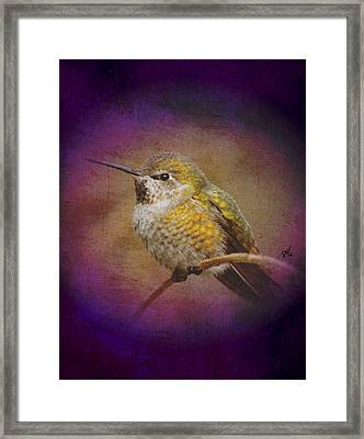 Framed Print featuring the digital art Hummingbird Rufous by John Wills