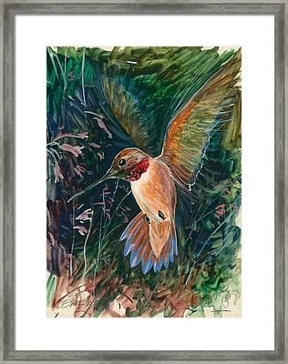 Hummingbird Framed Print by Shari Erickson