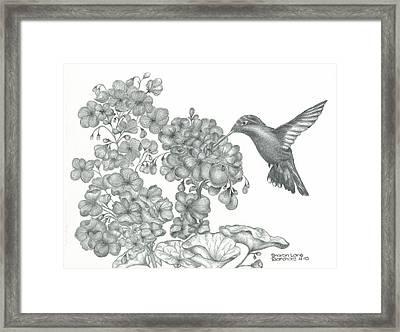 Hummingbird  Framed Print by Sharon Blanchard