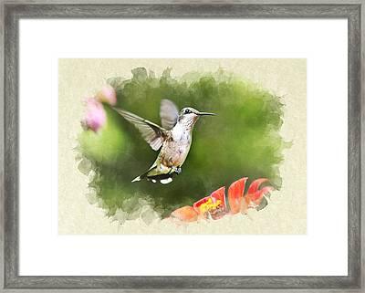 Hummingbird Shimmering Breeze Blank Note Card Framed Print