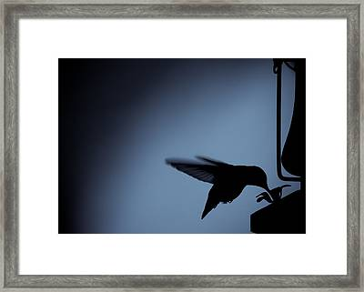 Hummingbird Silhouette Framed Print by Edward Myers