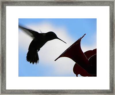 Framed Print featuring the photograph Hummingbird Silhouette by Sandi OReilly