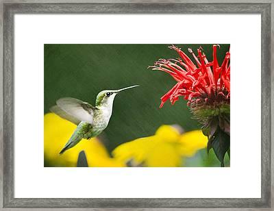 Hummingbird Snack Framed Print