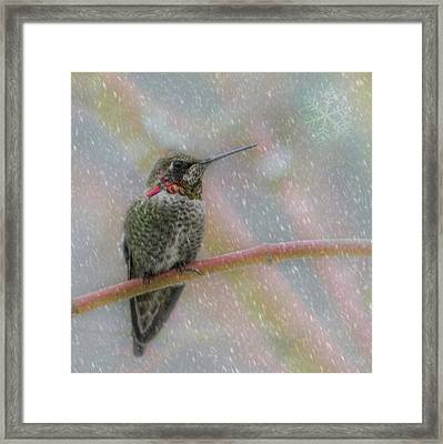 Framed Print featuring the photograph Hummingbird Snowfall by Angie Vogel