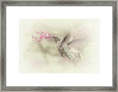 Hummingbird Softly Framed Print