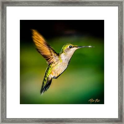 Hummingbird Sparkle Framed Print