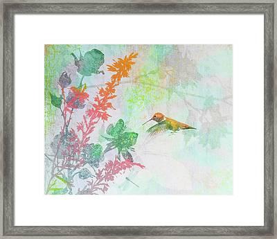Hummingbird Summer Framed Print