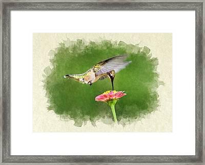 Hummingbird Sun Sweet Blank Note Card Framed Print
