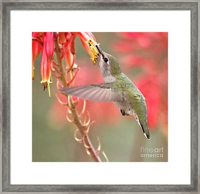 Hummingbird Suspended In Time Framed Print