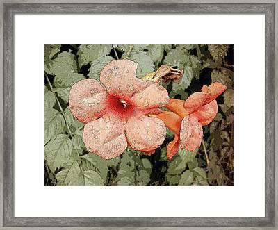 Hummingbird Vine Framed Print
