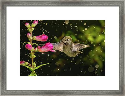 Framed Print featuring the photograph Hummingbird Visits Flowers In Raining Day by William Lee