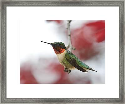 Framed Print featuring the photograph Hummingbird Watch Tower by Lara Ellis