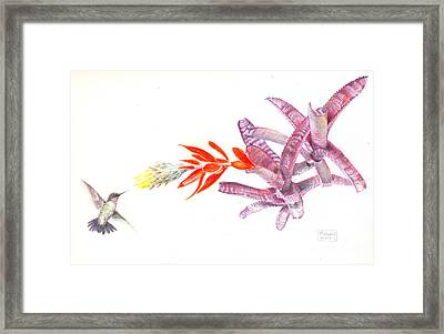 Hummingbird With Bromeliad Framed Print