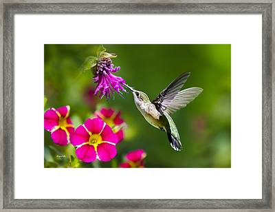 Hummingbird With Flower Framed Print