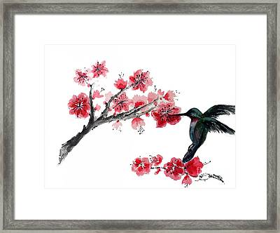 Hummingbird With Plum Blossom Framed Print by Sibby S