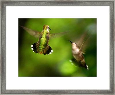 Hummingbirds - Fighting Framed Print by Fred Baird