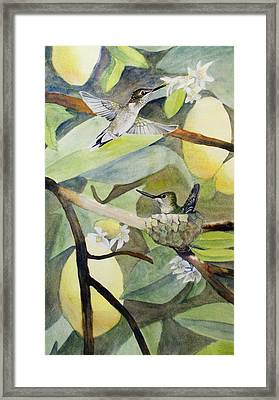 Hummingbirds And Lemons Framed Print