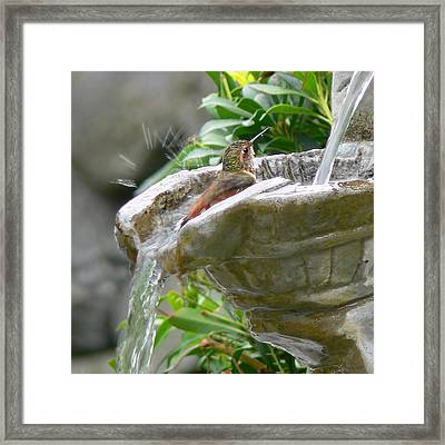 Hummingbirds Do Take Baths Framed Print by Jennie Marie Schell