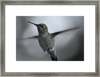 Framed Print featuring the photograph Hummm by Cathie Douglas