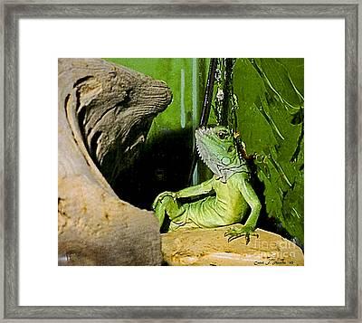 Humorous Pet Iguana Photo Framed Print by Carol F Austin
