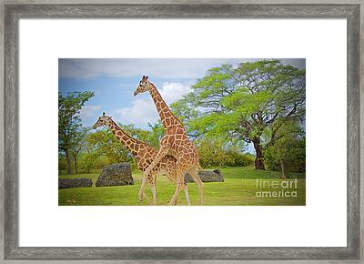Hump Day   Framed Print by Judy Kay