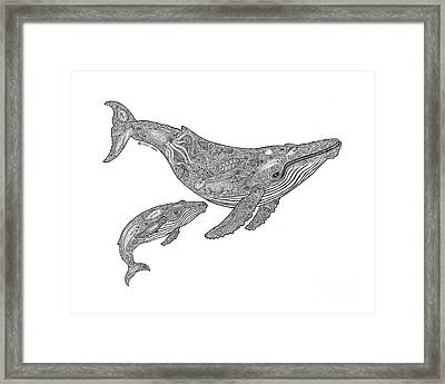 Humpback And Calf Framed Print