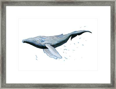 Humpback Blue Framed Print by Lee Gelwicks