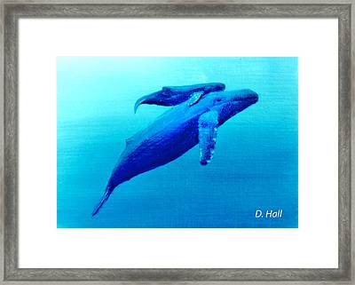 Humpback Mother Whale And Calf  #11 Framed Print by Donald k Hall
