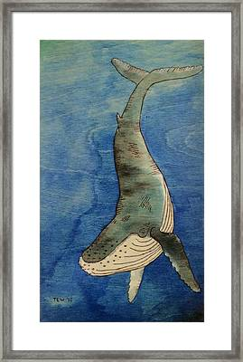 Humpback Framed Print by Ned Willis