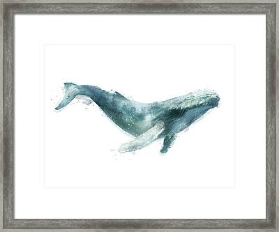 Humpback Whale From Whales Chart Framed Print by Amy Hamilton