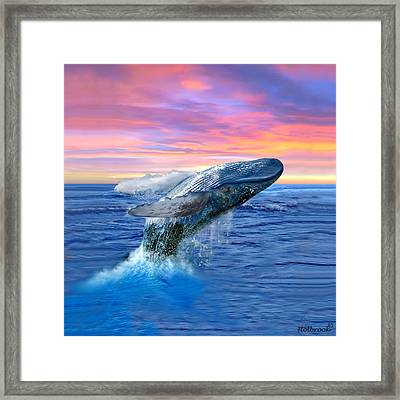 Humpback Whale Breaching At Sunset Framed Print by Glenn Holbrook