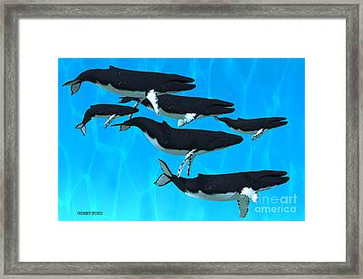 Humpback Whale Family Framed Print by Corey Ford