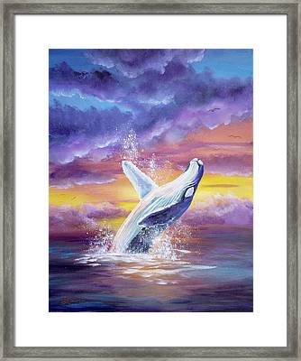 Humpback Whale In Sunset Framed Print by Laura Iverson