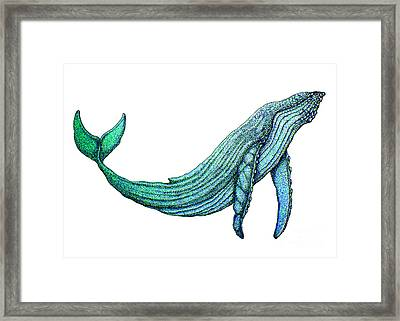 Humpback Whale Framed Print by Nick Gustafson