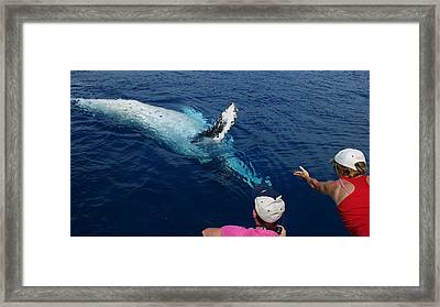 Humpback Whale Reaching Out Framed Print