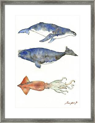 Humpback Whale, Right Whale And Squid Framed Print