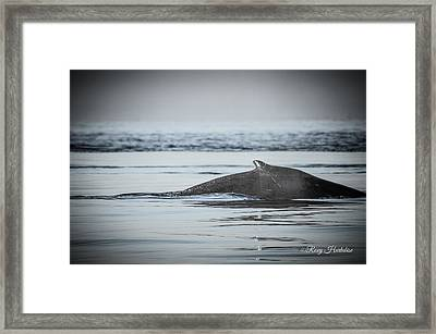 Humpback Whale Surface Framed Print