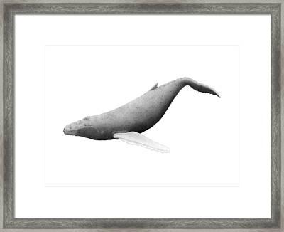 Humpback Whale Swim Framed Print by Selinda Van Horn