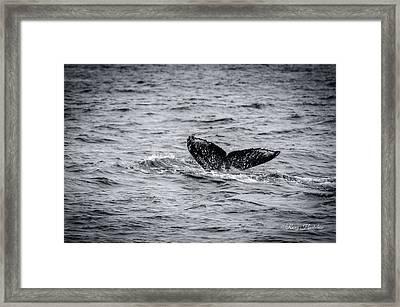 Humpback Whale Tail Framed Print