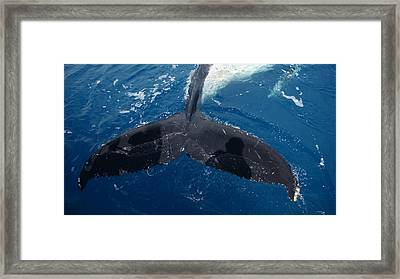 Humpback Whale Tail With Human Shadows Framed Print
