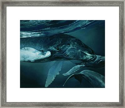 Humpback Whale V Framed Print by Heather Theurer