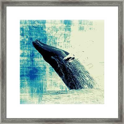 Humpback Whale V3 Framed Print by Brandi Fitzgerald
