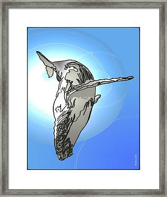 Humpback Whale Framed Print by W Gilroy