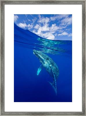 Humpback Whale With Clouds Framed Print