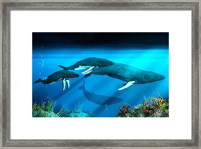 Humpback Whales Framed Print by Daniel Eskridge