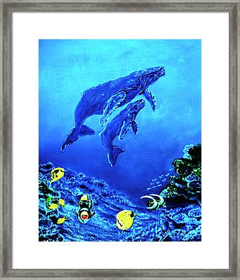Humpback Whales Hawaii An Reef #14 Framed Print by Donald k Hall